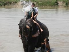 04 elefant